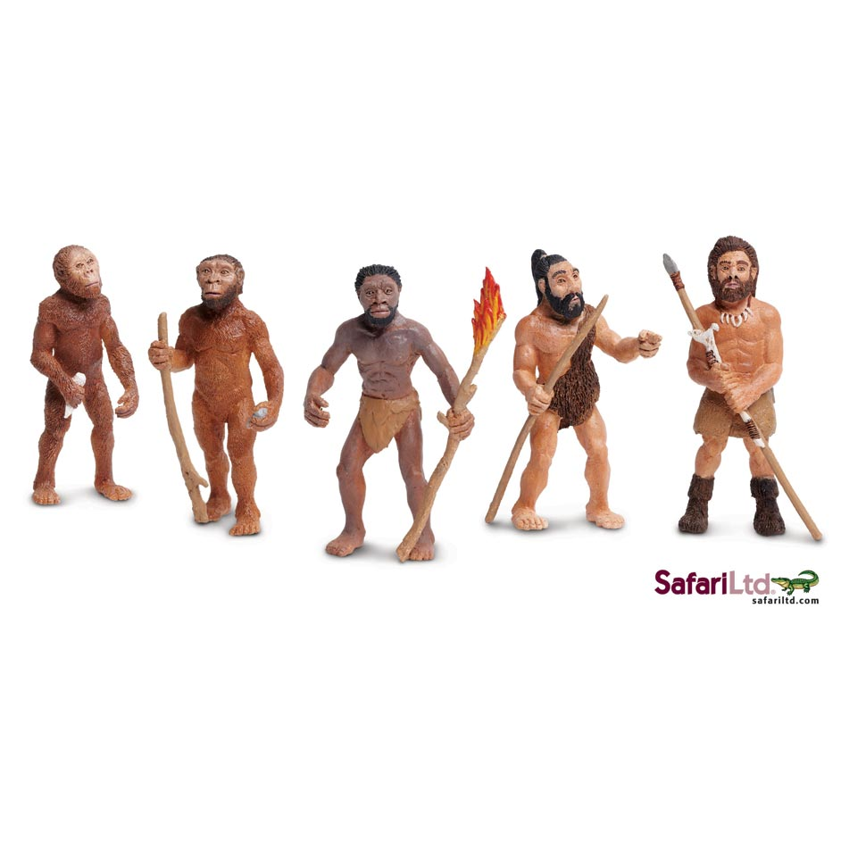 Evolution of man model set (5 pieces).