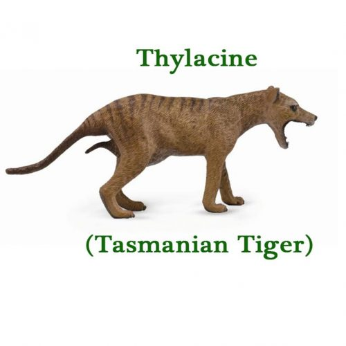 CollectA Thylacine
