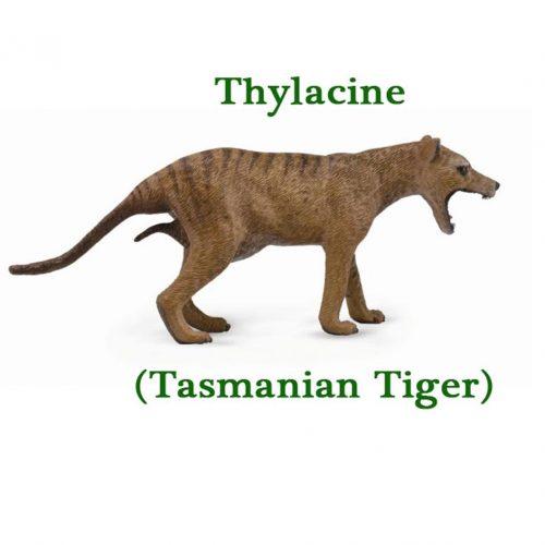 CollectA Thylacine
