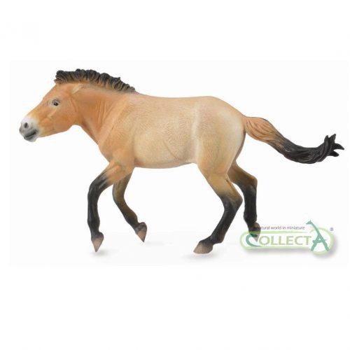 CollectA Przewalski's Horse