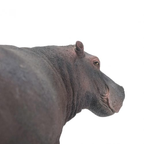 PNSO Hippo model.