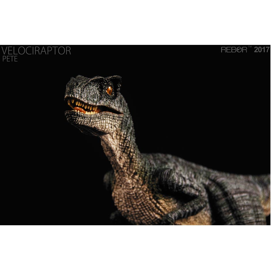 "The Rebor Velociraptor replica ""Pete""."