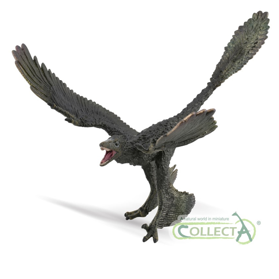 CollectA Deluxe Microraptor dinosaur model CollectA Age of Dinosaurs Microraptor (1:6 scale)