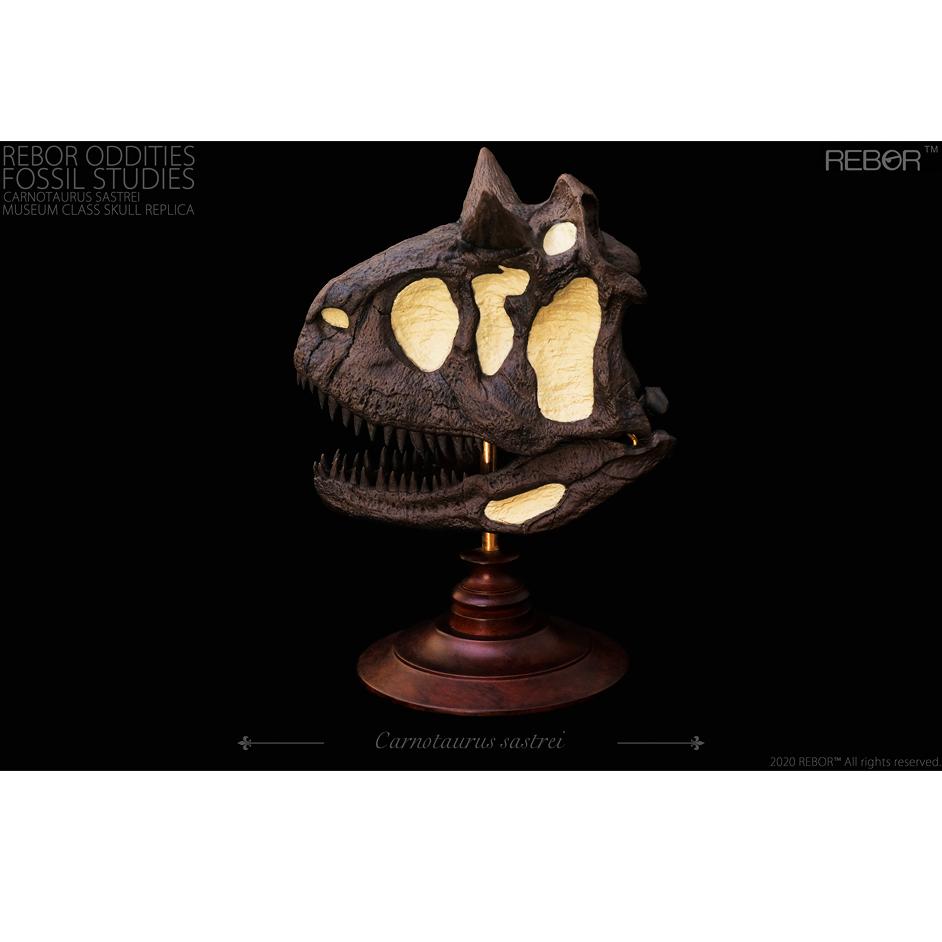 Rebor Oddities Fossil Studies Carnotaurus sastrei Museum Class Skull Replica