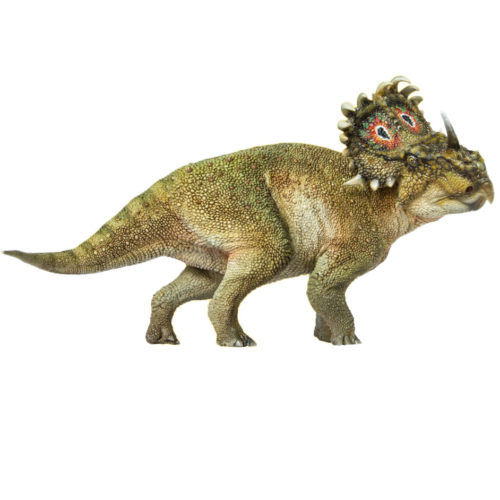 PNSO A-Qi Sinoceratops (Ceratopsian) lateral view